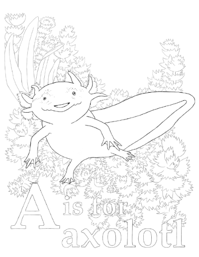 """""""A is for axolotl"""". Line drawing of an axolotl swimming in front of some plants over the text."""